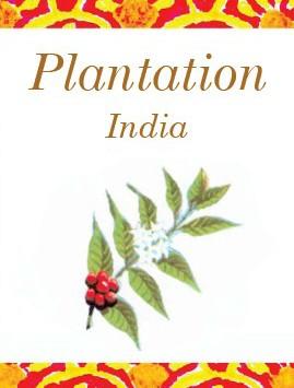 Plantation_Front